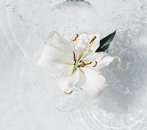クリア, クレンジング, さざ波, しぶきの無料の写真素材