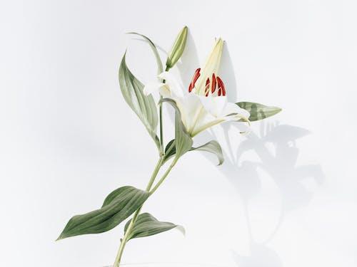 アート, エレガント, シンプル, トロピカルの無料の写真素材