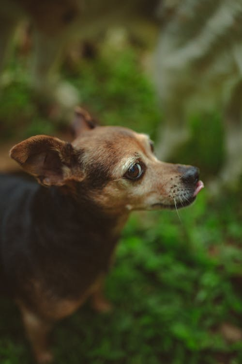 Small purebred dog in green nature