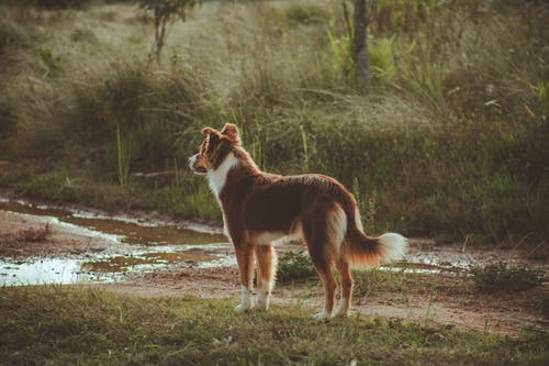 Purebred calm dog on meadow in woods