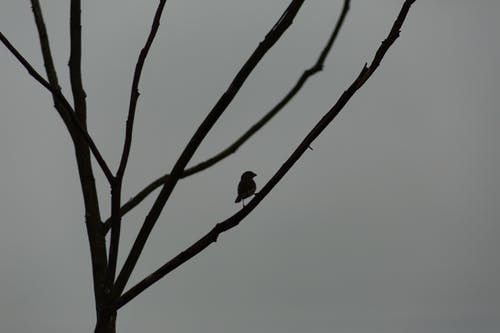 Silhouette of bird on branch