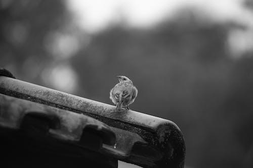 Calm small bird on fence