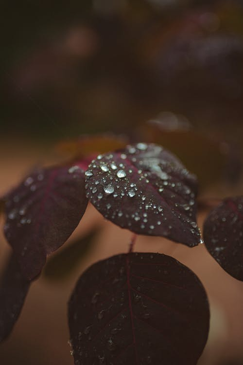 Shiny crystal drops of water on smooth green leaves of plant on blurred background