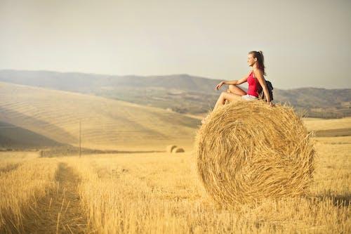 Бесплатное стоковое фото с бобовые культуры, восход, высохший, дневное время