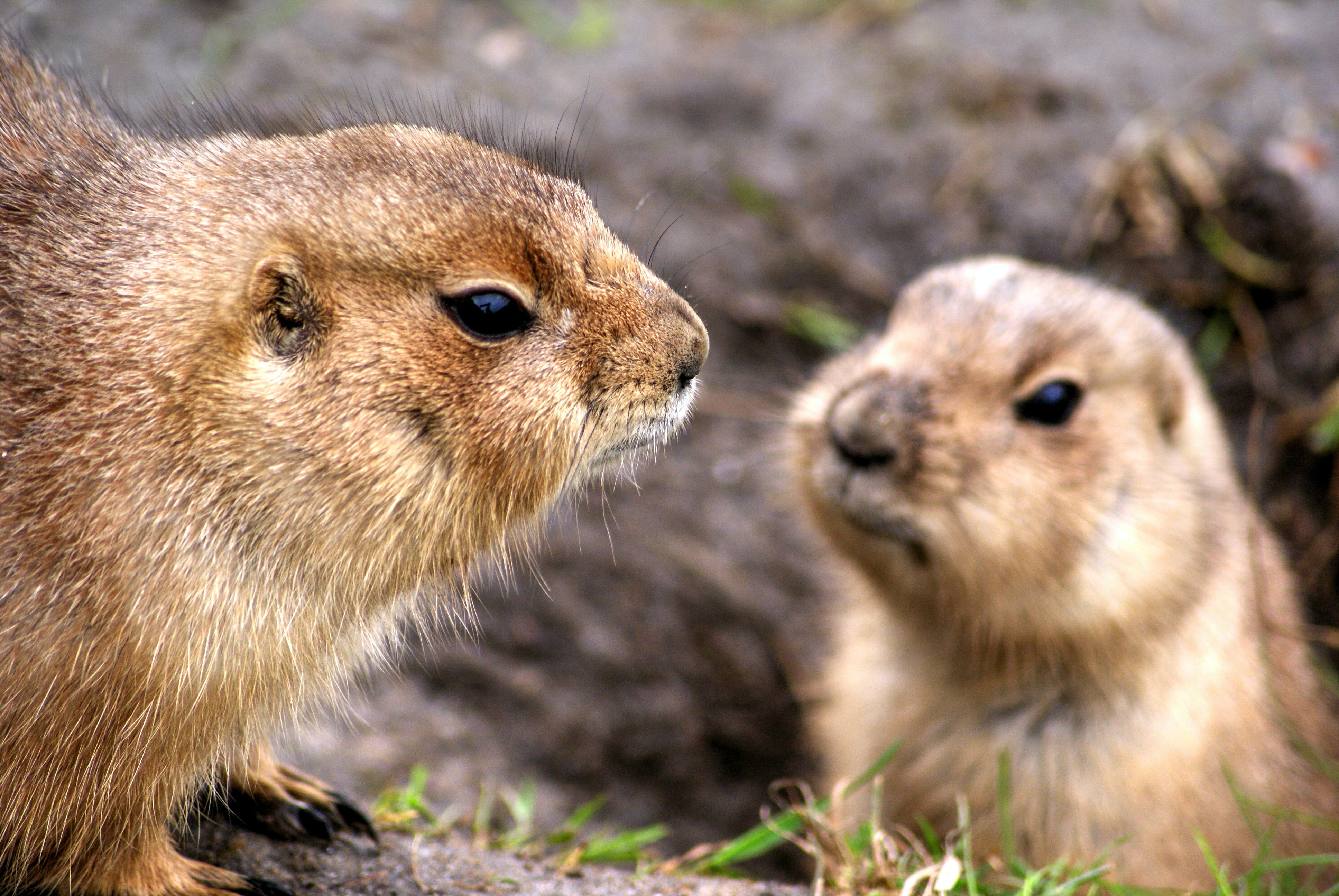 Selective Focus Photograph of Two Rodents
