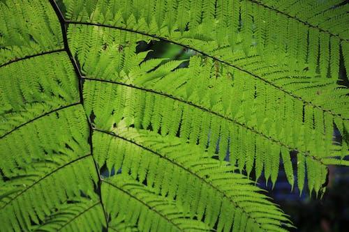 Free stock photo of australia, beauty, botanic, botanic garden