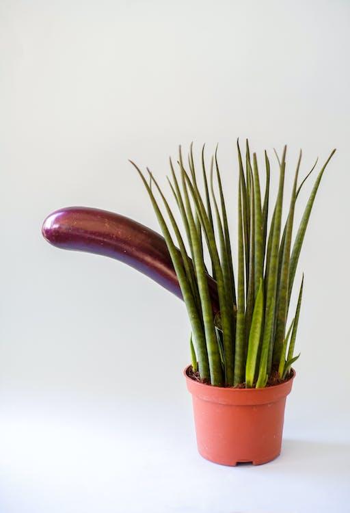 Vegetable Behind Plant