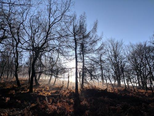 Kostenloses Stock Foto zu baum, bäume, bäume wald