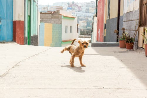 Free stock photo of baby dog, brown dog, cute dog, dog