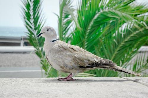 Free stock photo of bird, bird chirping, bird photography, bird watching