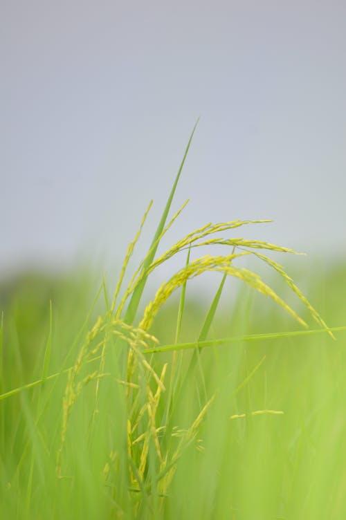 คลังภาพถ่ายฟรี ของ abhas photography, Adobe Photoshop, agricture, animsl