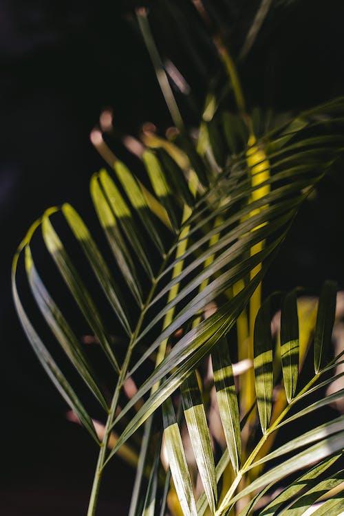 Základová fotografie zdarma na téma bujný, čerstvý, čistý, exotický