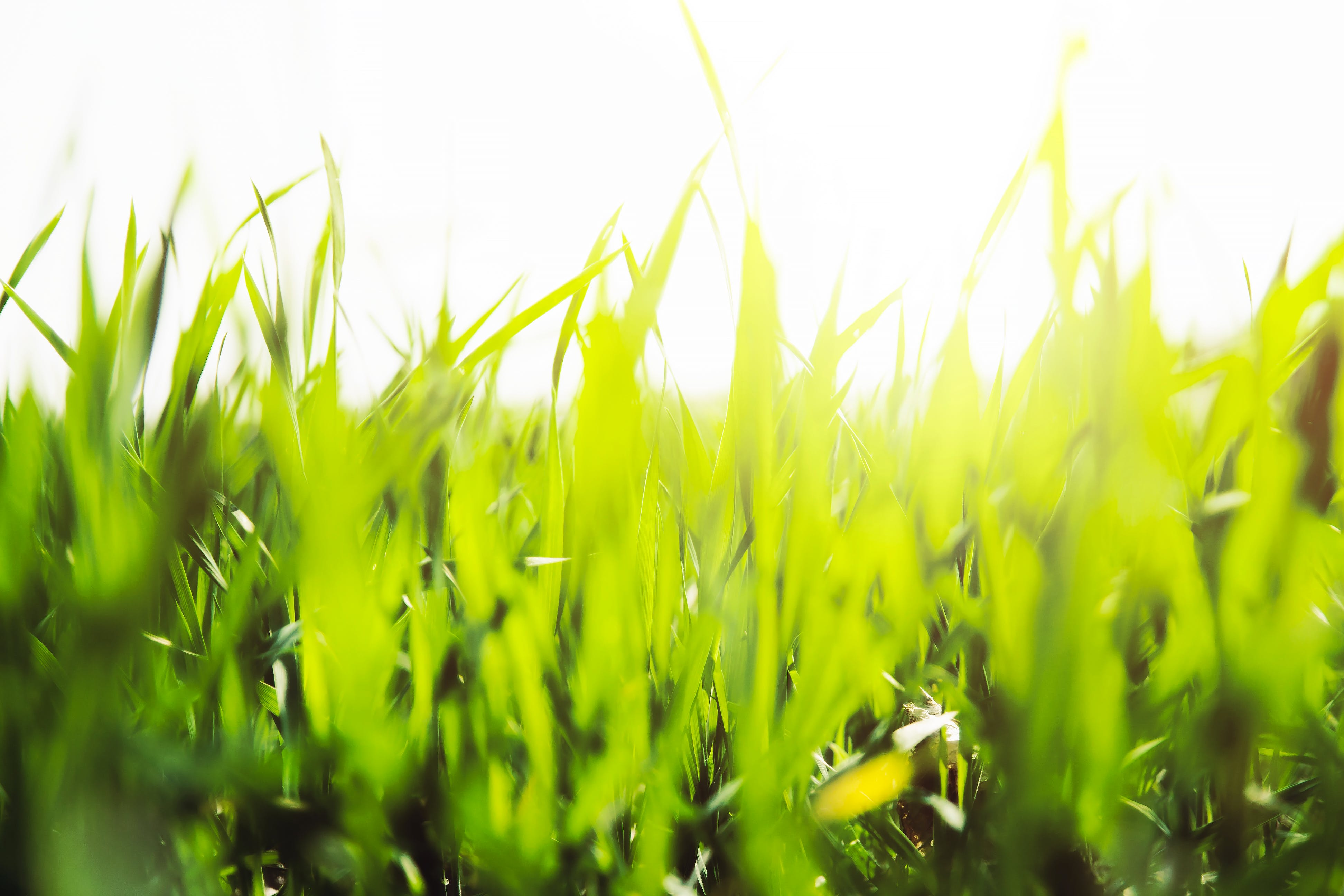 Photography of Grasses