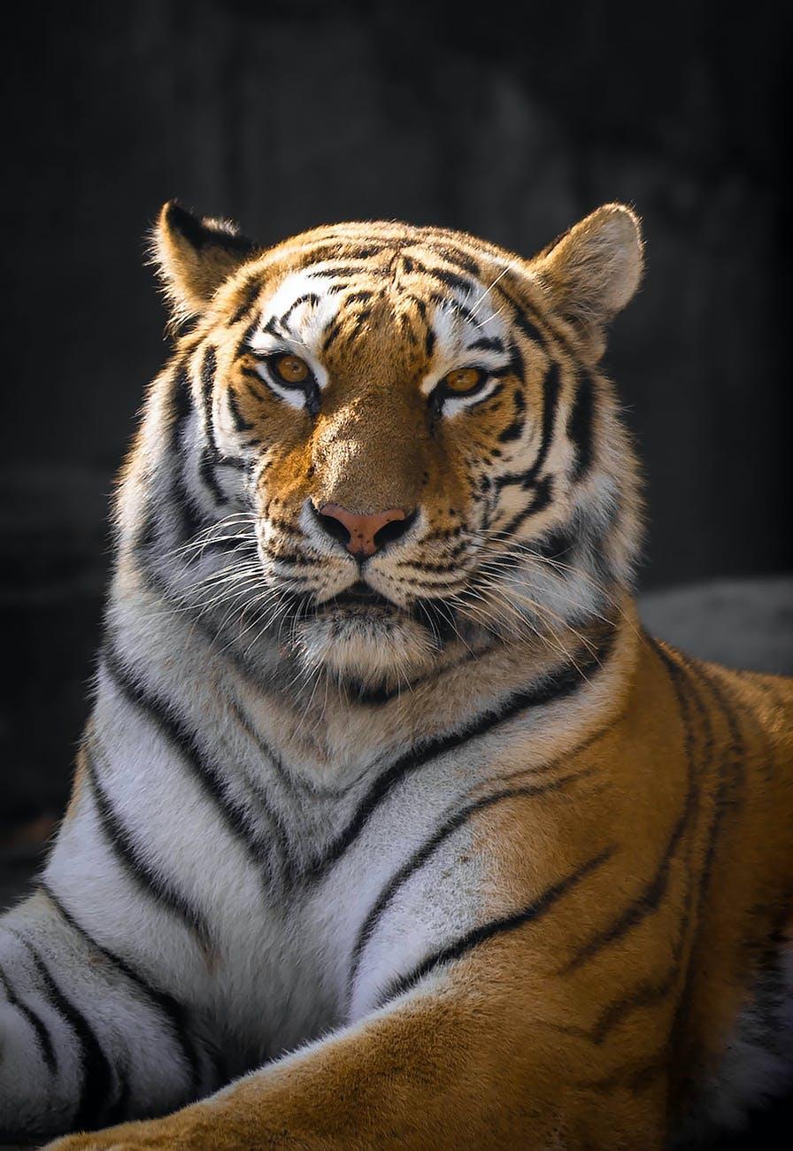 凝視, 动物园动物, 动物园摄影