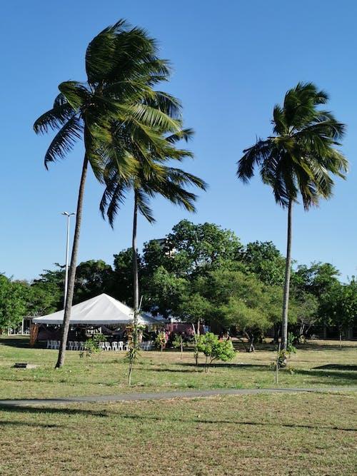 Free stock photo of coastal landscape, fan palm, landsape