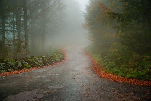 Gratis stockfoto met blad, bomen, Bos, herfst