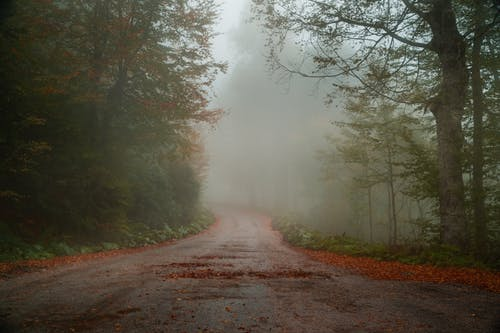 Photo of Foggy Road Between Trees