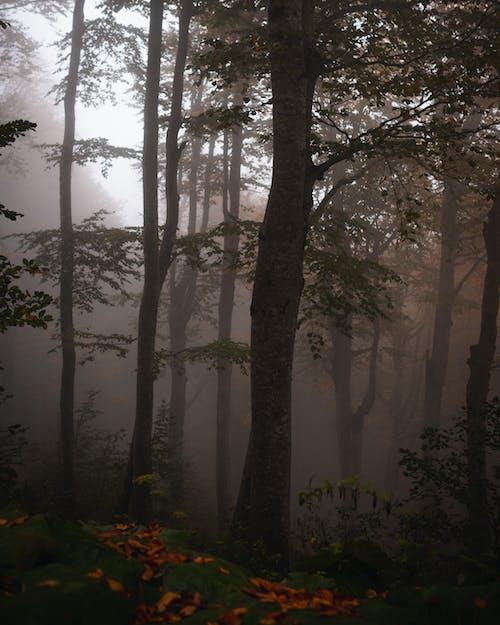 Gratis stockfoto met bomen, Bos, ellende, herfst