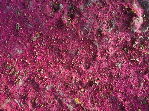 Free stock photo of bloom, pink, texture