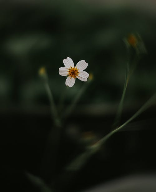 A Photo of White Flower in Tilt Shift Lens