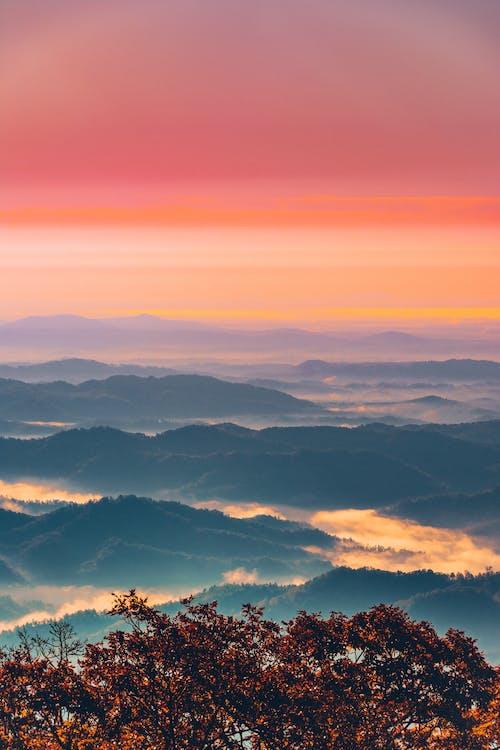 Photos gratuites de à contre-jour, aube, automne, brouillard
