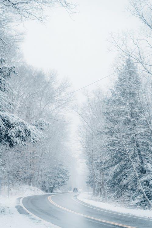 Photos gratuites de arbre, bois, brouillard, brume