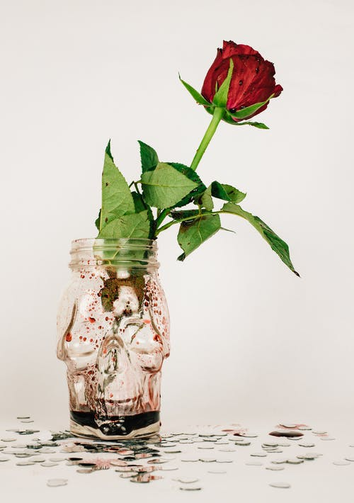 Red Rose in Clear Glass Jar