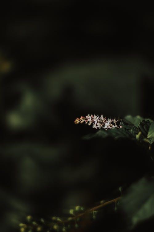 Imagine de stoc gratuită din floare albă, floare frumoasa, flori albe, flori frumoase