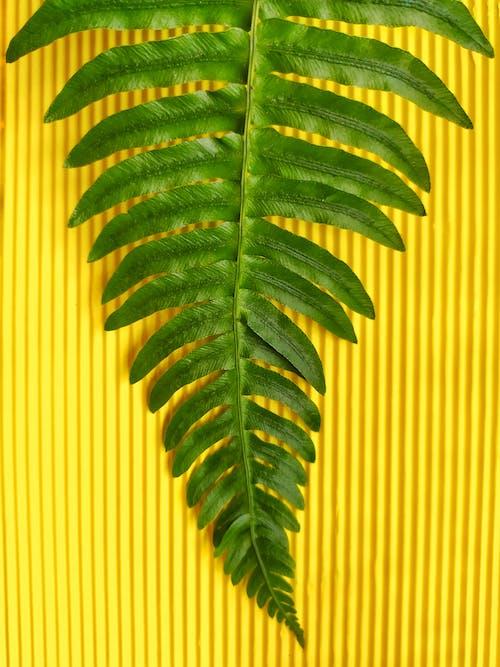 Free stock photo of Big leaf, colorful, dark green, dark green plants