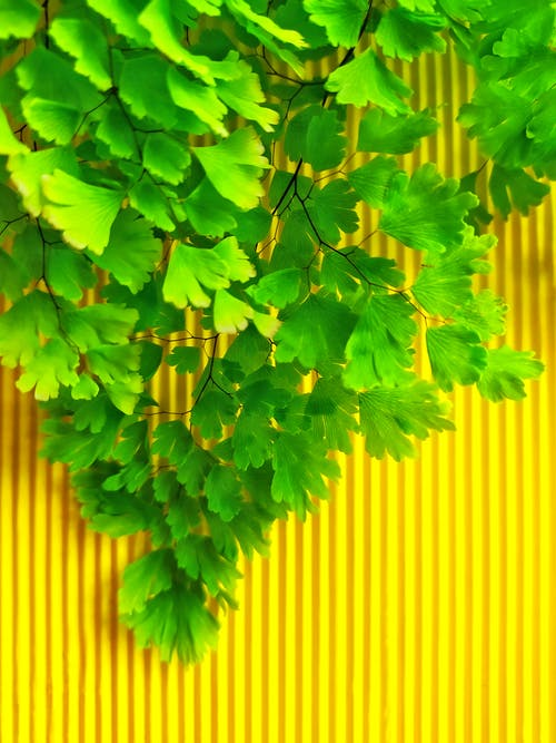 Free stock photo of art background, contrast, cute leafs, evergreen
