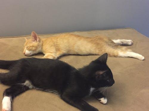 Free stock photo of haan and skye, sleeping kittens, star wars kitten