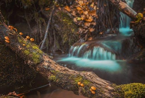 蘑菇上棕色树日志