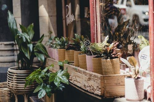 Fotos de stock gratuitas de flor, hipster, madera, tienda de flores