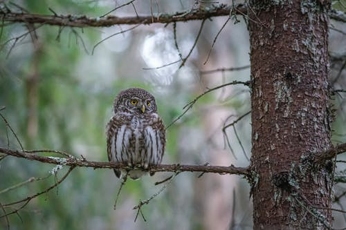Brown Owl Perched on Brown Tree Branch