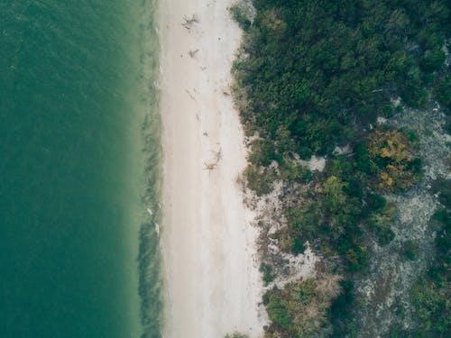 ağaçlar, deniz, deniz manzarası, doğa içeren Ücretsiz stok fotoğraf