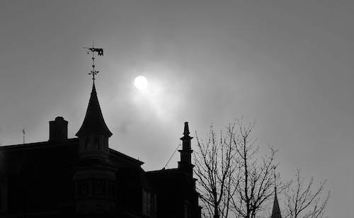 Základová fotografie zdarma na téma ranní mlha
