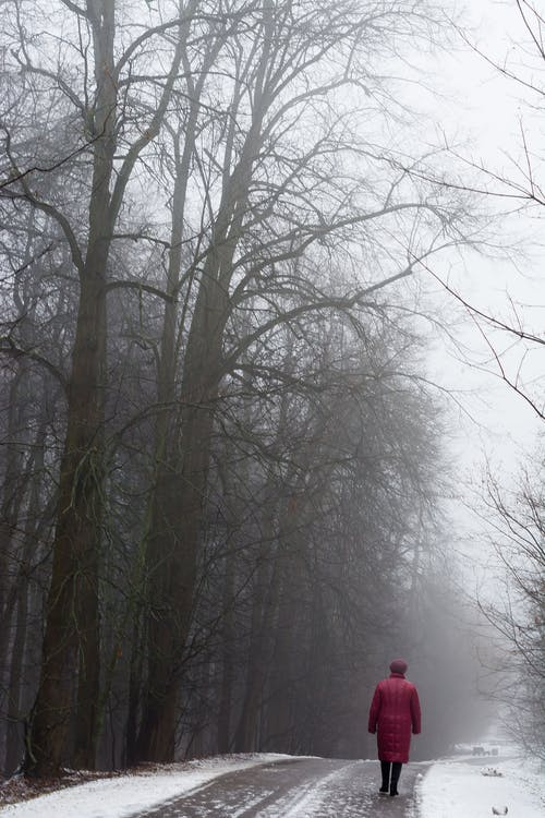 Free stock photo of fog, thaw