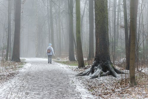Person Walking on Pathway Between Trees during Foggy Weather