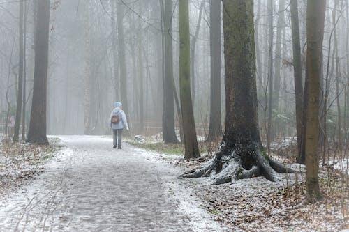 Immagine gratuita di alba, alberi, ambiente, boschi