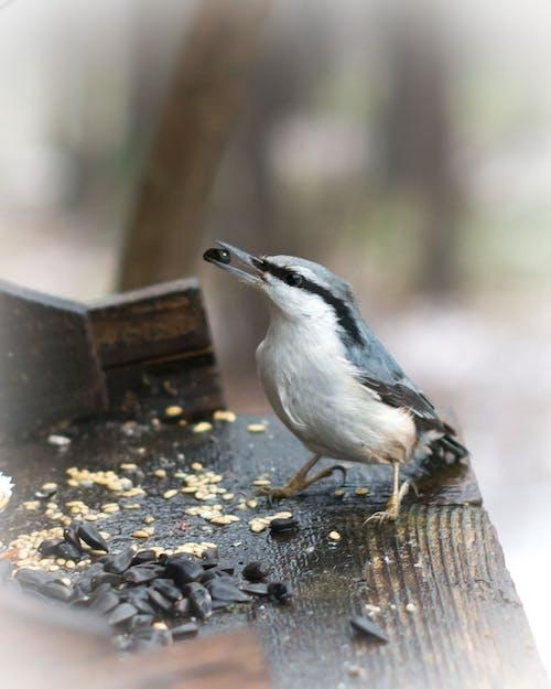 Free stock photo of birds, cardinal red bird bird feeder