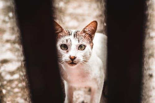 關在籠子裡的流浪白貓
