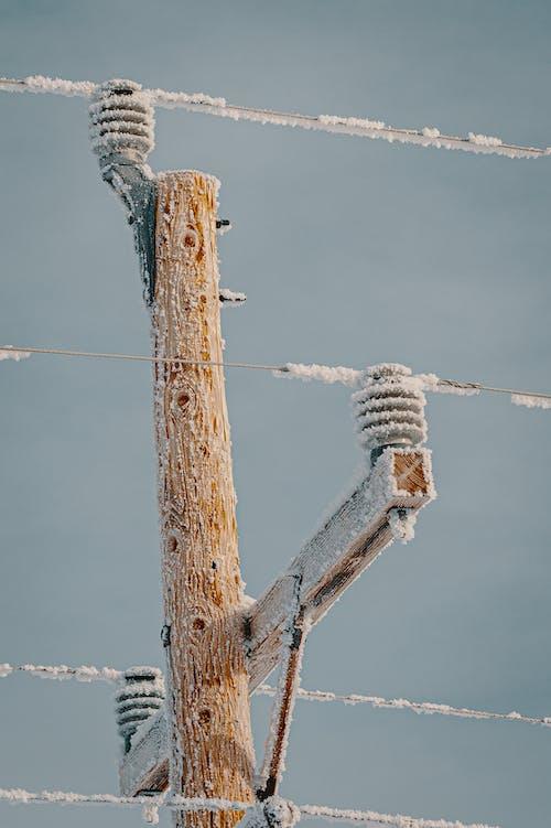 Imagine de stoc gratuită din cablu, cer, concentrare, de lemn