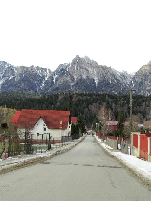 Free stock photo of cold, fir tree, fir trees, mountain