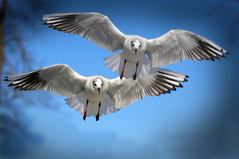 Wallpapers Hd Flying Birds Apple Animals Blue Sky Desktop: Birds Images · Pexels · Free Stock Photos