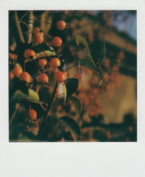 Fotos de stock gratuitas de agricultura, apple, árbol, caer