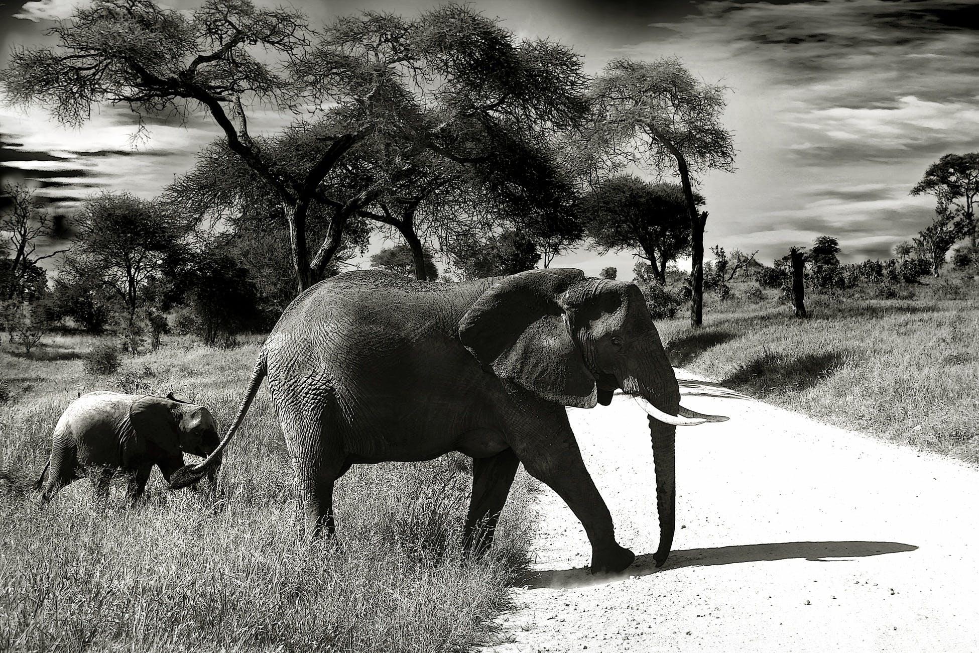 Kostenloses Stock Foto zu bäume, elefanten, gras, landschaft