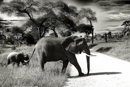 Foto profissional grátis de animais, areia, árvores, elefantes