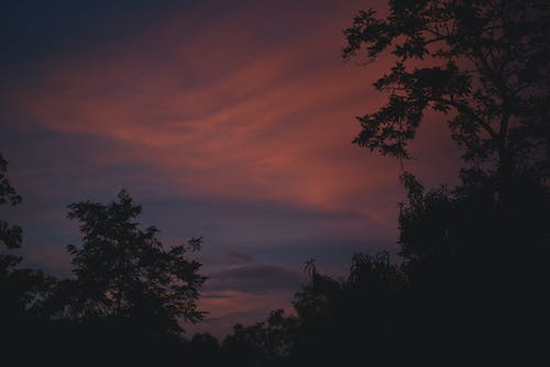 Free stock photo of beautiful sky, blue and red, plants, silhoutte