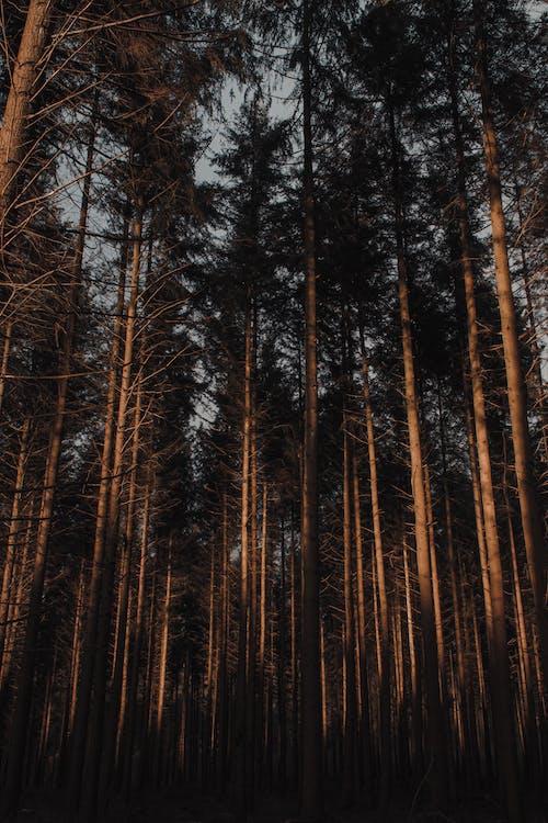 Foto Von Hohen Bäumen