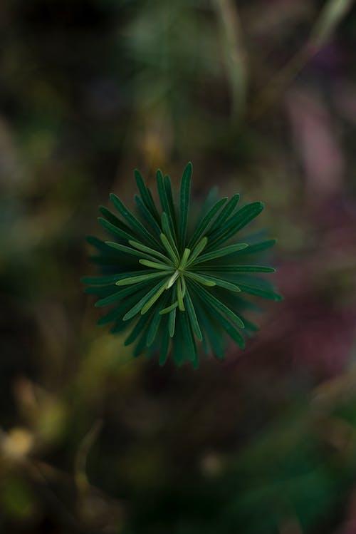 Free stock photo of bosco, garden plant, green, green color